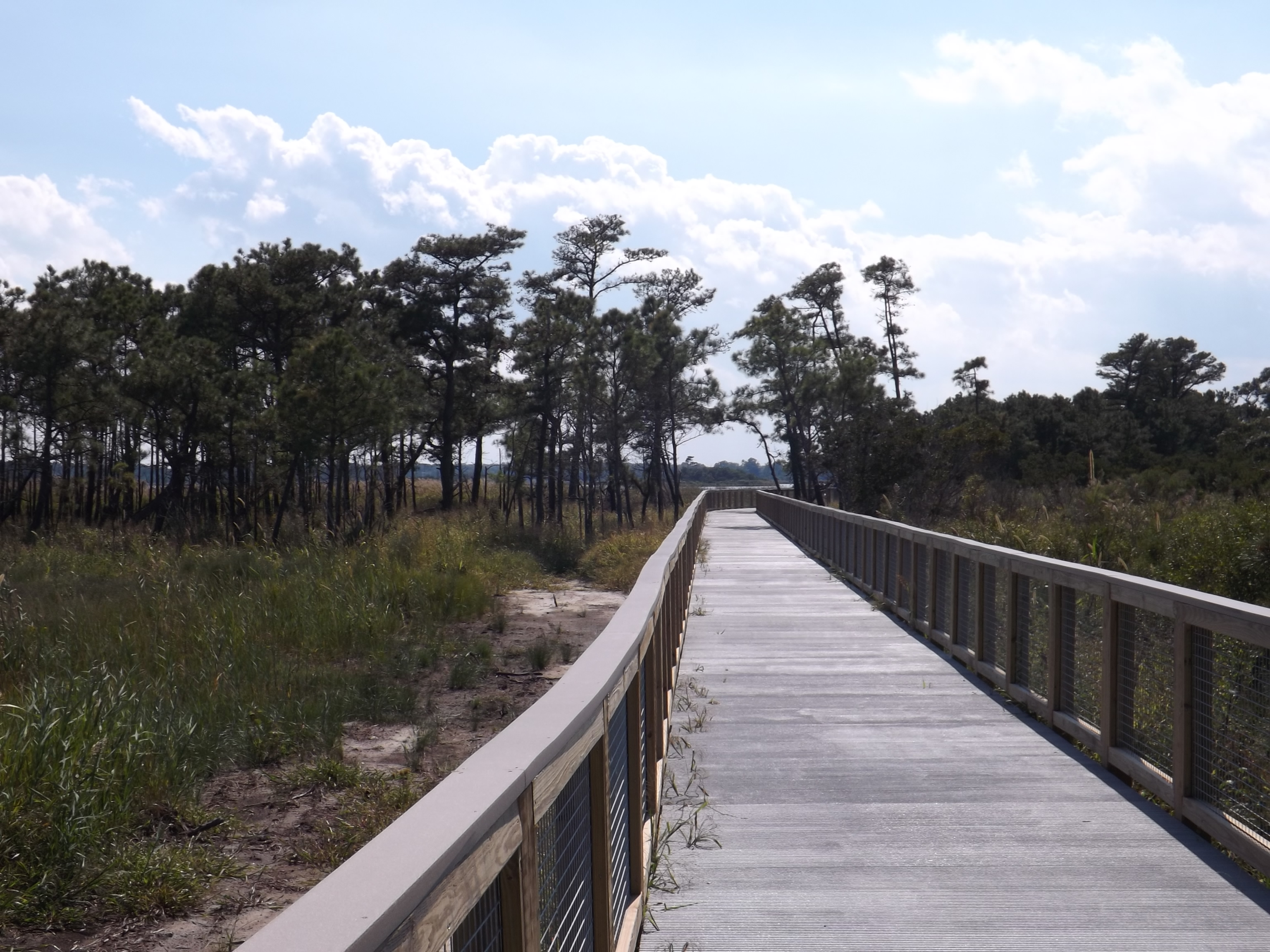 Gordons Pond Trail, cape henlopen, bike delaware, sussexcounty, get a kid outdoors, hiking in delaware,