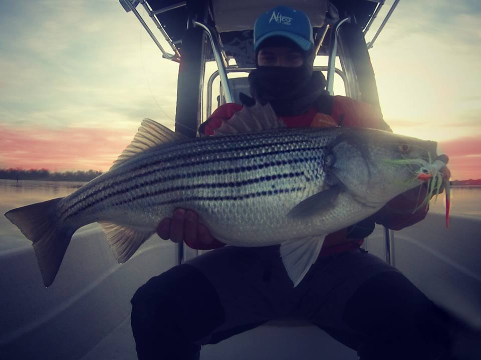 striped bass, chesapeake bay, maryland, winter fishing, resident bass