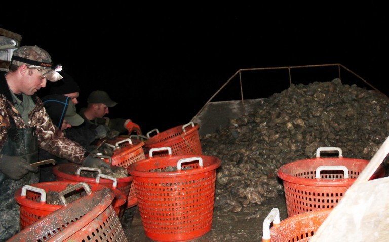 maryland,dorchester, dnr, natural resources police,poached oysters