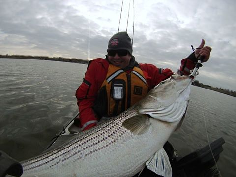 light tackle kayak trolling the chesapeake bay, alan battista, striped bass, chesapeake bay, maryland, catch and release, fifty pound club