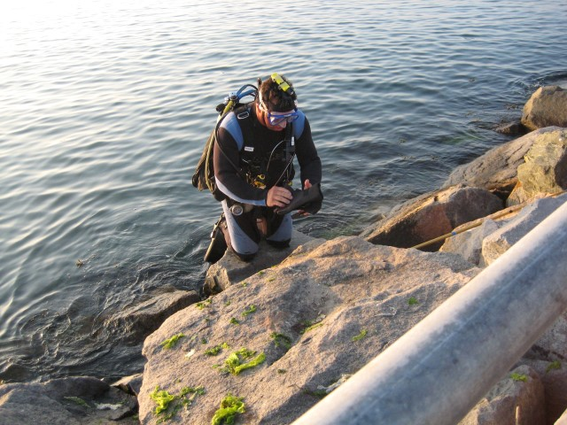 scuba diving the indian river inlet, delaware, sussex county, spearfishing, indian river bay, padi diving,