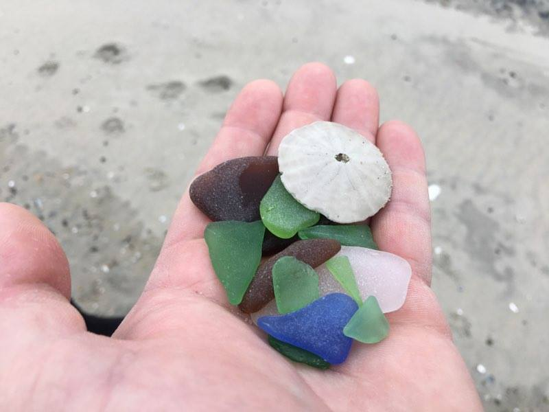 beach glass, sand dollar, delaware, sussex county, delaware seashore state park, rehoboth beach, bethany beach, fenwicks island, cape henlopen state park, indian beach, poodle beach, beach combing, blue glass, green glass