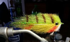 fly fishing, perch pattern, delaware, sussex county, millsboro pond,