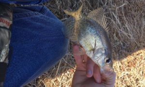 pot nets bayside, pond fishing, trout magnets, wax worms