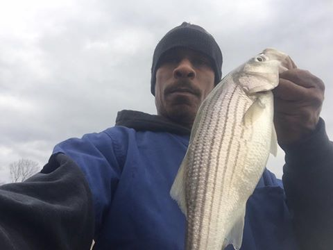 short striped bass, rockfish, delaware bay, river, augustine beach, port penn, greens beach, the pipes, bloodworms