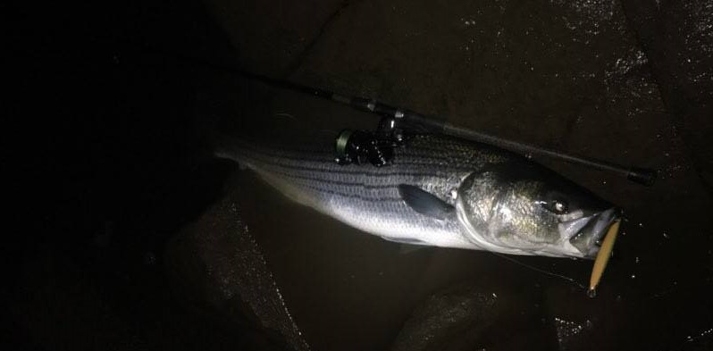 Winter is coming back but the fish don 39 t care delaware for Tidal fish chesapeake
