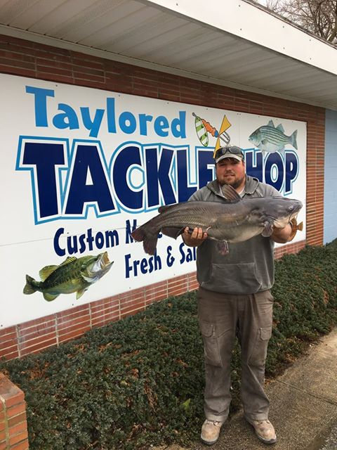 delaware state record catfish, sussex county, broad creek, nanticoke river, phillips landing, laurel, seaford