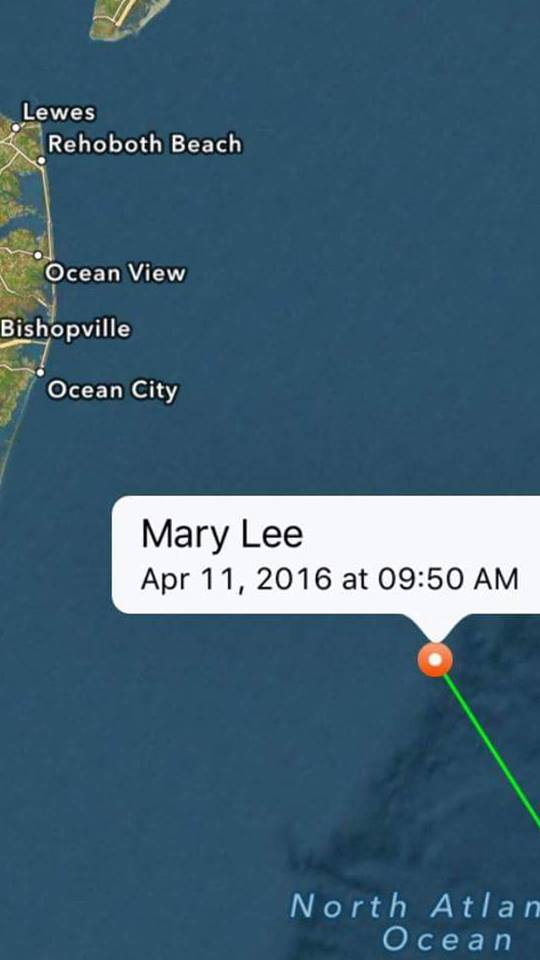 mary lee,ocearch, tagged great white sharks, delaware, maryland, sussex county, worcester county, ocean city,