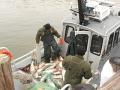 poaching, maryland, MD DNR, natural resourseces police, marine police, talbot, worcester, ocean city, assateague, chnicoteague,