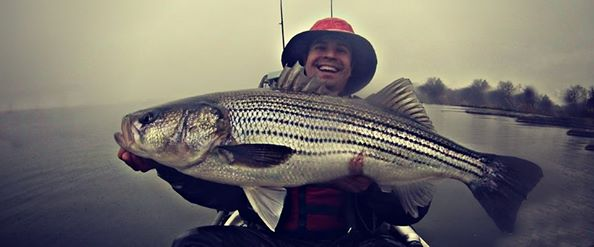 striped bass, maryland, chesapeake bay, tidal creeks, rivers, Brandon Shores,