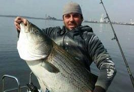 striped bass, spring run, spawning grounds, delaware river, rockfish, linesider, bunker chunks, 60 pound club,